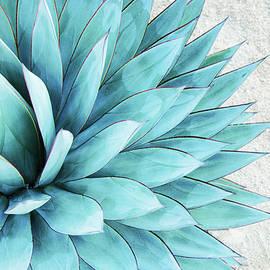 Blue Agave by Pamela N. Martin