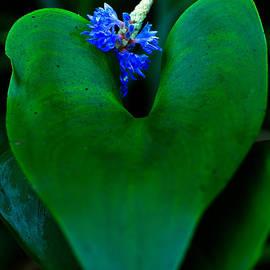 Haren Images- Kriss Haren - Blue and green