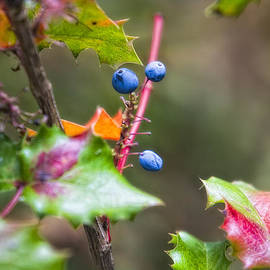 Blue Berries by Timothy Hacker