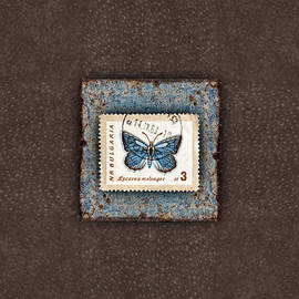 Blue Butterfly on Copper by Carol Leigh
