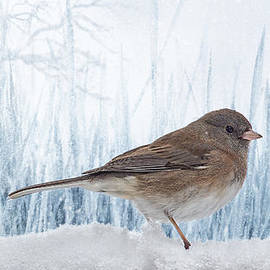 Blue Christmas Junco by Bill Tiepelman