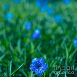 Blue Flower by Julian Cook