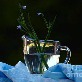 Luv Photography - Blue Flowers