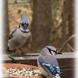 Sandra Clark - Blue Jay couple