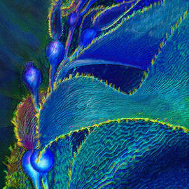 Jane Schnetlage - Blue Kelp