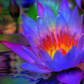Fli Art - Blue Lotus