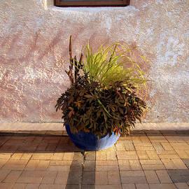 Ann Powell - Blue Planter Morning Sun