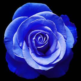 Aimee L Maher Photography and Art Visit ALMGallerydotcom - Blue Rose
