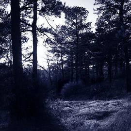 Nina Fosdick - Blue Shadows