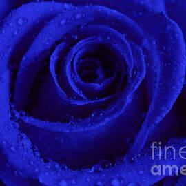 Tracy  Hall - Blue Velvet