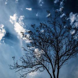 Blue Winds by Karol Livote