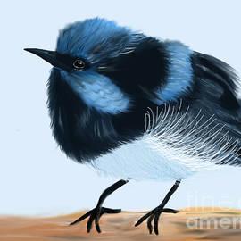 Blue Wren Beauty