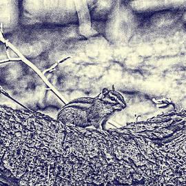 Blueprint-chipmunk by Jim Lepard