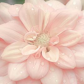 Blushing Dahlia by Julie Palencia