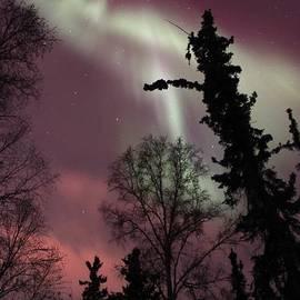 David Broome - Boreal Forest Aurora