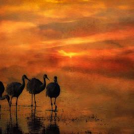 Priscilla Burgers - Bosque Sunset