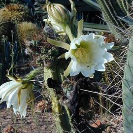 Botanicactus by Olaf Christian