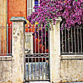 Bougainvillea on the Fence by Lainie Wrightson