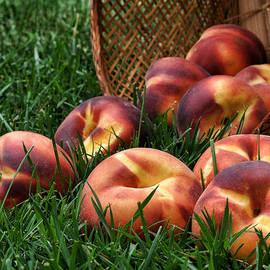 Nikolyn McDonald - Bountiful Harvest