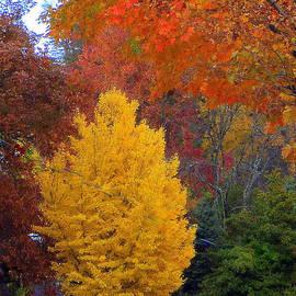 Paula Tohline Calhoun - Bright Autumn