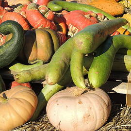 Bright Colored Gourds II by Kimberly Perry