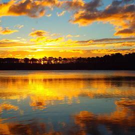 Dianne Cowen - Brilliant Sunrise