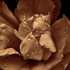 Jennie Marie Schell - Bronze Ruffled Parrot Tulip Flower