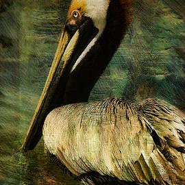 Brown Pelican Beauty by Deborah Benoit