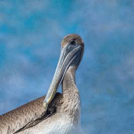 Brown Pelican by Kim Hojnacki