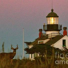 California Views Mr Pat Hathaway Archives - Buck by Point Pinos Lighthouse Pacific Grove 2014