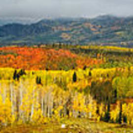 Buffalo Pass Steamboat Springs Co by Teri Virbickis