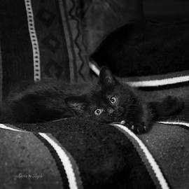 Bugzy in Black and White by Karen Slagle