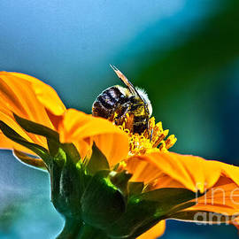 Bumble Bee I by Ms Judi