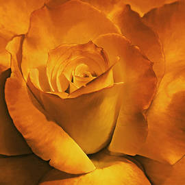 Burnt Gold Rose Flower by Jennie Marie Schell