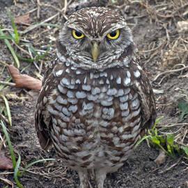 Eric Riesch - Burrowing Owl on Guard