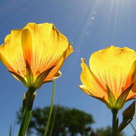 Berlandier's Yellow Flax by Lisa Reid