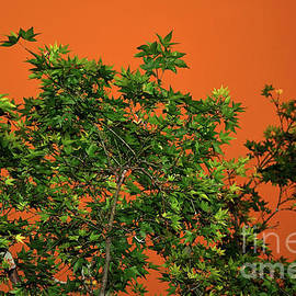 Kaye Menner - Bushfire Skies
