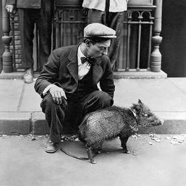 Buster Keaton With A Peccary by Underwood Archives