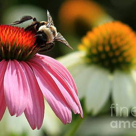 Reid Callaway - Busy Bee