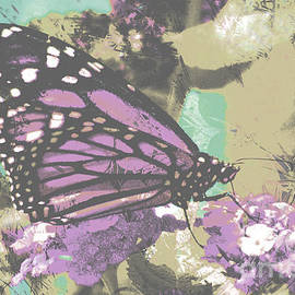 Butterflies by Beverly Guilliams