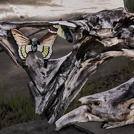 Butterflies by Photographic Art by Russel Ray Photos