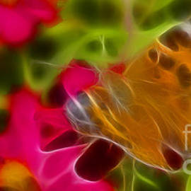 Gary Gingrich Galleries - Butterfly-5311-fractal