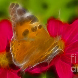 Gary Gingrich Galleries - Butterfly-5416-fractal