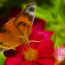 Gary Gingrich Galleries - Butterfly-5430-fractal