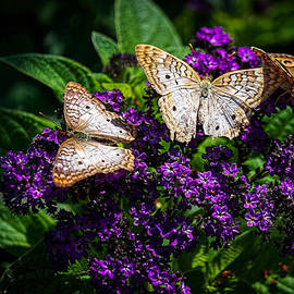 Butterfly Bush by William Reek