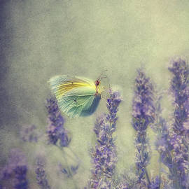Butterfly by Claudia Moeckel