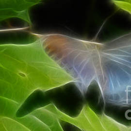 Gary Gingrich Galleries - Butterfly-Fractal