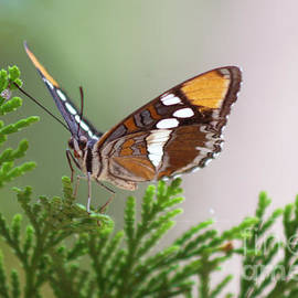 Butterfly by M Valeriano