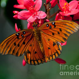 Butterfly on Blossoms by Stephen Whalen