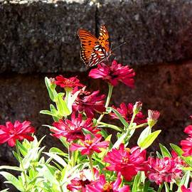 Gardening Perfection - Butterfly Ponderance